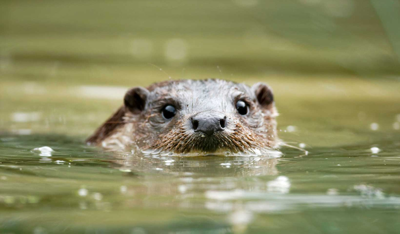 Streams and otters at Wintringham